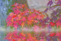 秋色に流されて。。