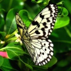 蝶が花咲く夢を見た