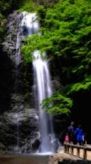 若葉の箕面の滝