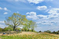 ポピーの咲く丘にて。。