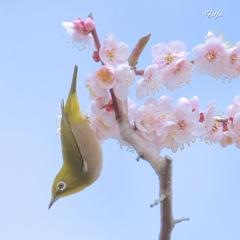 春の舞。。