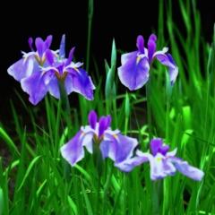 紫はサスペンスの香り