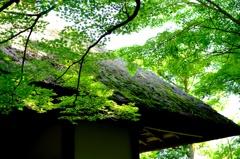 新緑に燃ゆる山門(4) ギャラリー用