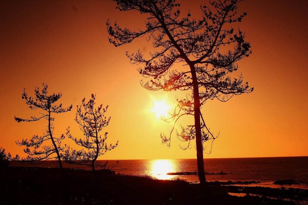 日本海 能登 見越しの松
