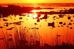 静寂の潮溜まり   能登 上野海岸