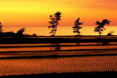 田んぼと海の夕景  能登