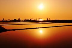 田んぼと日本海の夕景
