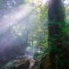 樹林の光芒