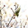 春をみつけて 2