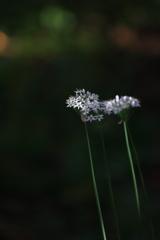 素通りされる小粒な花