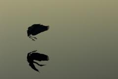 水面影絵(2)