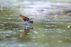 水切り給水飛行