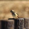 時期の身近な鳥さん 2