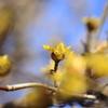 小粒の開花 2