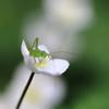 小さなゝ昆虫