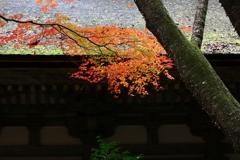 室生寺の紅いろ