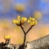 小粒の開花