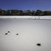 池に降り積もる雪