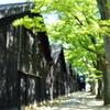 山居倉庫 欅並木