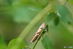 昆虫シリーズ