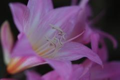 遊歩道の花