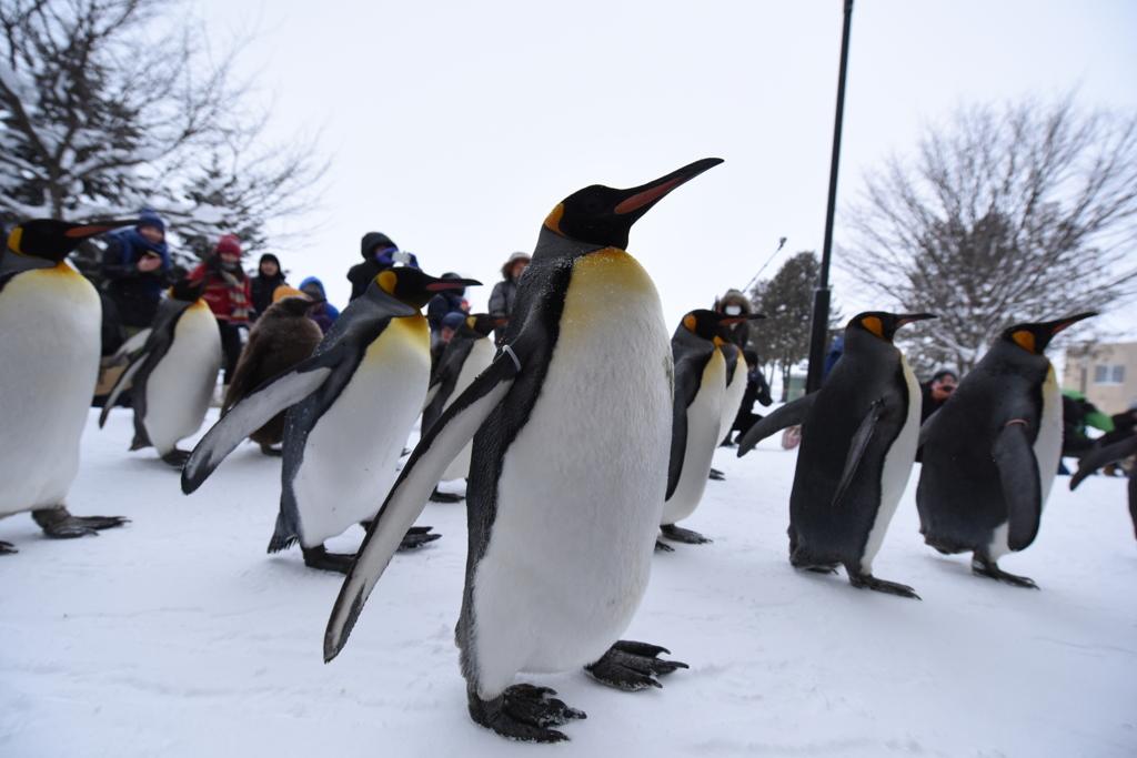 ペンギンの散歩だよーん♪