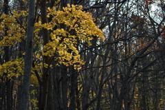 しばらくぶりの森3