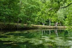 静寂の沼2
