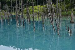 行かずにはいられない「青い池」