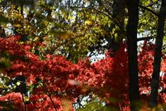 紅葉の流れ