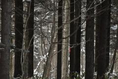 森のストライプ