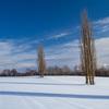 ポプラと大雪の山々