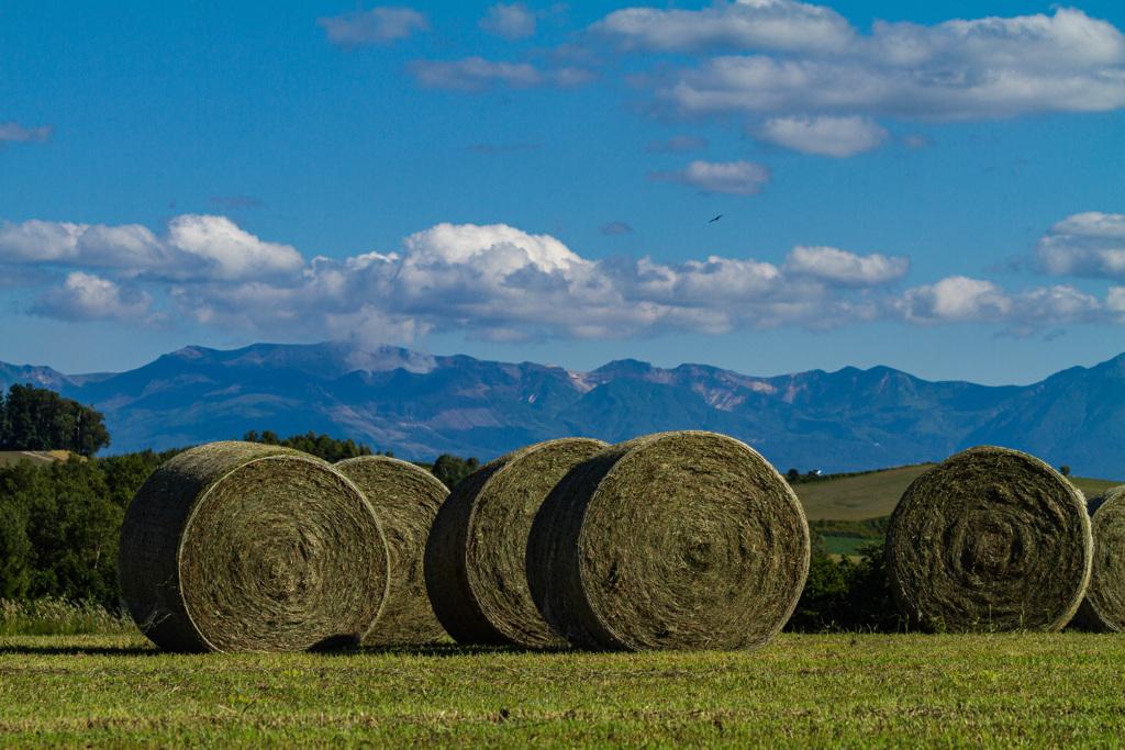 山と牧草ロール
