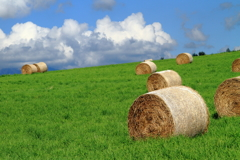 Roll on green grass