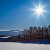 眩しい冬の陽