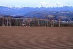 春の丘(6)