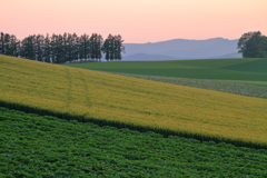夕景 ~マイルドセブンの丘~