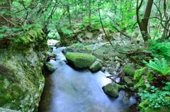 大倉滝まで歩く 06