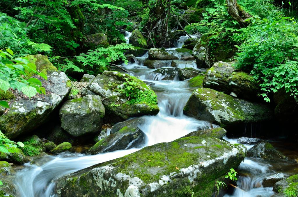 森のみどりと水のしろ 01