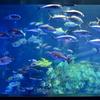 アクアリウムの魚たち 03 - 鳥羽水族館