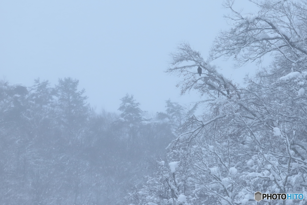 白い森に独り
