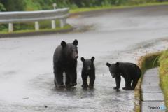 雨の道路を行く親子