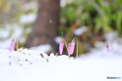 雪の中の妖精たち