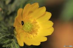 温かい湯たんぽのような花