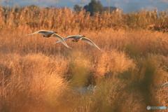 冬枯れの湿地を行く