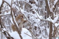 雪まみれになって