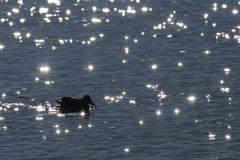 星屑を浮かべた湖で