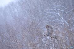雪の降りしきる森で