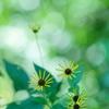 小さな太陽の花