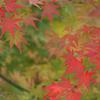 法多山の紅葉 6